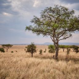 Serengeti Picnic (2016)