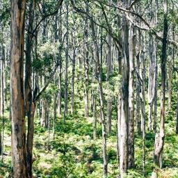 Boranup Karri Forest, Western Australia (2018)